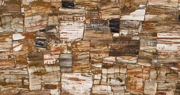 Petrified Wood Classic